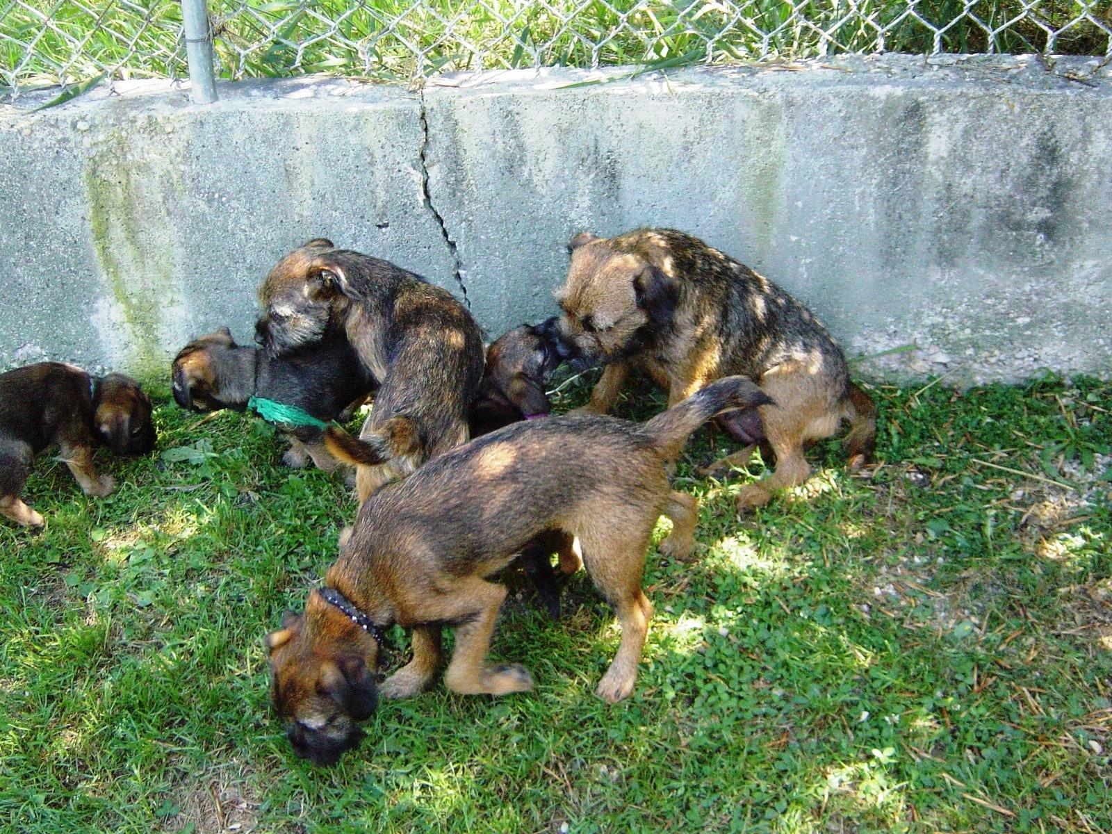 Tanna's 1st litter Aug 9, 2008 120-min