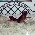 Tigger & Chicklet 2000