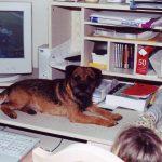 Tigger on computer desk